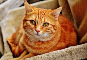Two cats in New York tested positive for COVID-19